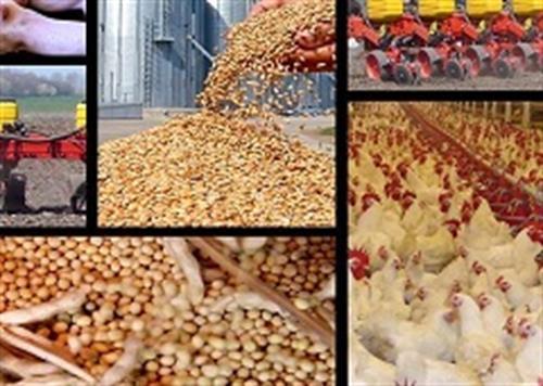 آغاز تحویل تنخواه نهادههای دامی به مرغداران/ قیمت جوجه یکروزه چندبرابر نرخ مصوب است